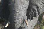 Konrad Lorenz e l'elefante (Zambia e Botswana 2016) thumbnail