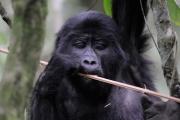 UGANDA: Verdi colline d'Africa thumbnail